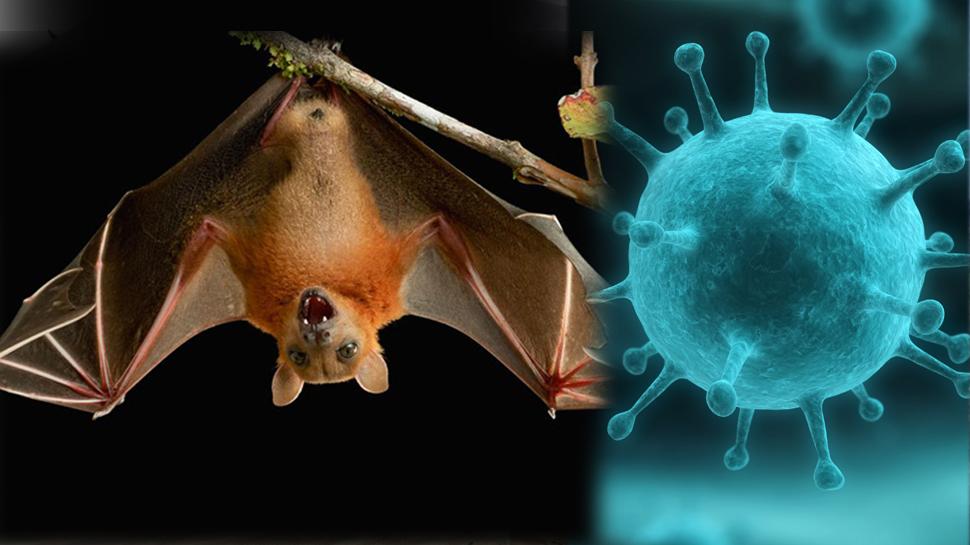 Image result for चमगादड़ और इंसान, फैल रहा ये खतरनाक वायरस